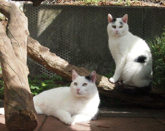Marlie und Merlin