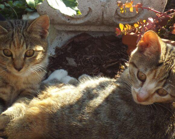 Minni und Dasy