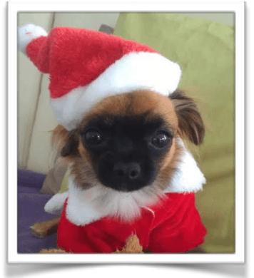 tierisches Fotoshooting am 01. Dezember 2018