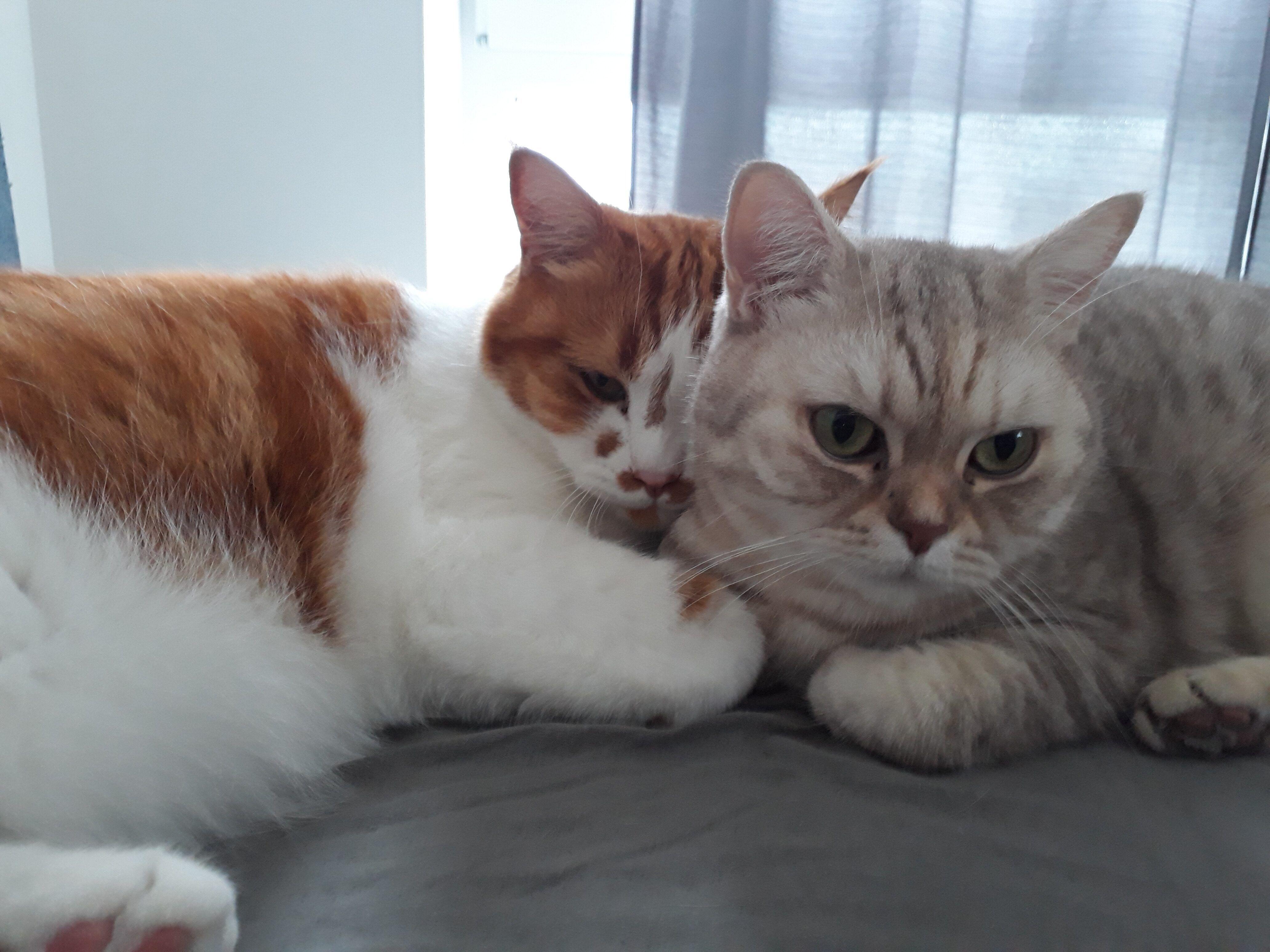 Junior und Felicita