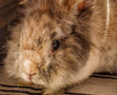 Vermittlungshilfe für 2 wunderschöne Kaninchen