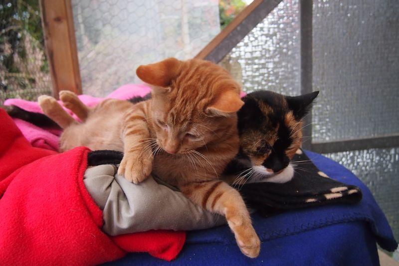 Enie und Mia