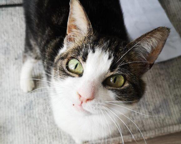 alte Katzendame im Rosengarten zugelaufen