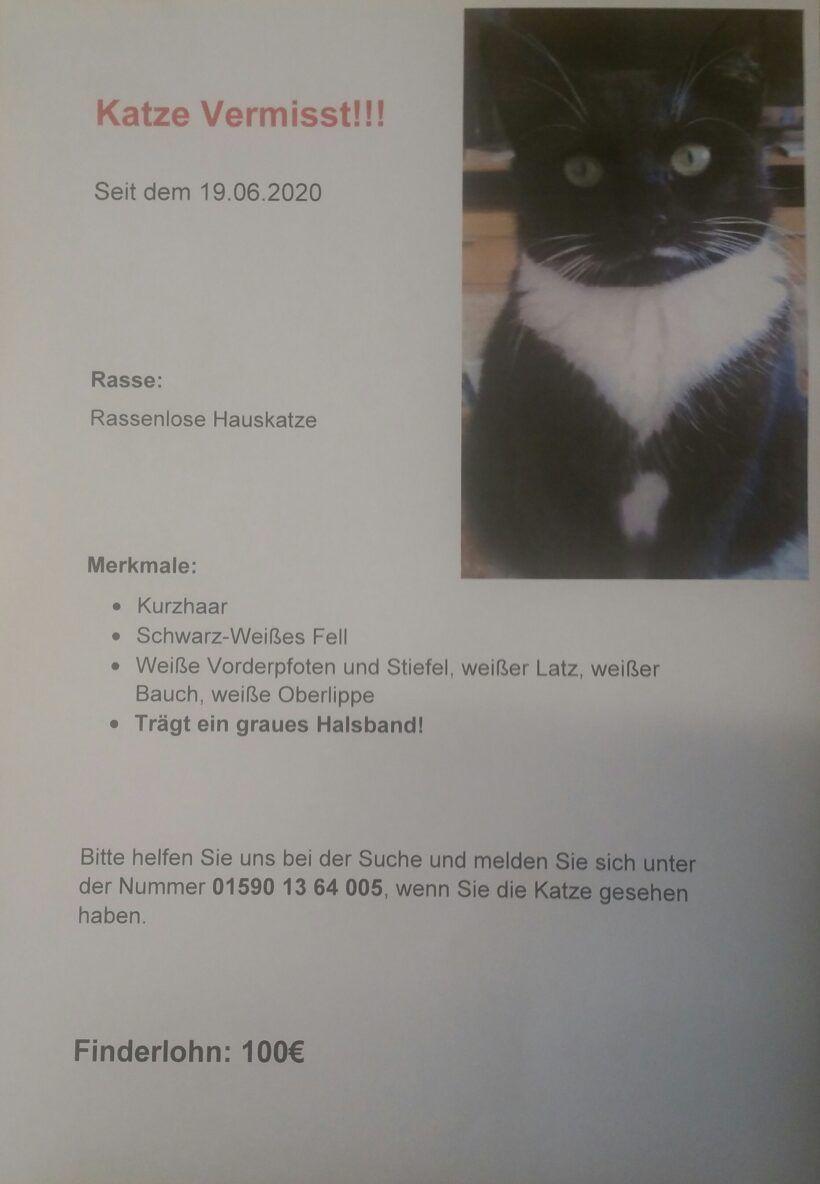 Schwarz/weiße Katze vermisst